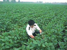Inspection inspectors soybean plantations in Division I